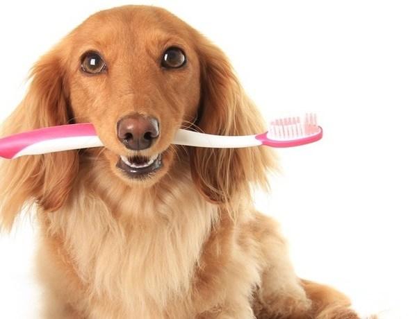Angie List Dog Dental_2614146671778807887