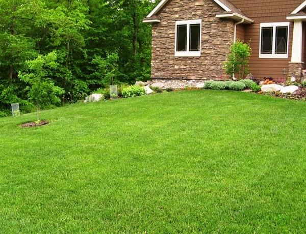 Angie List Lush Lawn_8714665216901402315