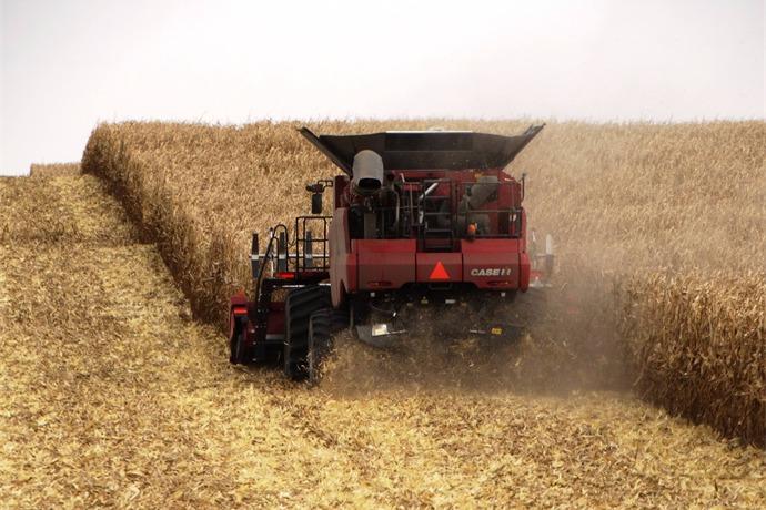 Fall corn harvest_4807484618225371287