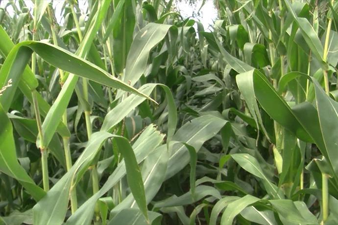 crops_-7565505001215670775
