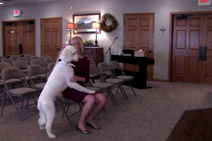 Dog grief therapy_-335168451223795697