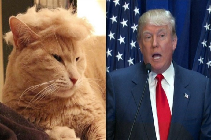 trump your cat_6994843438502396464