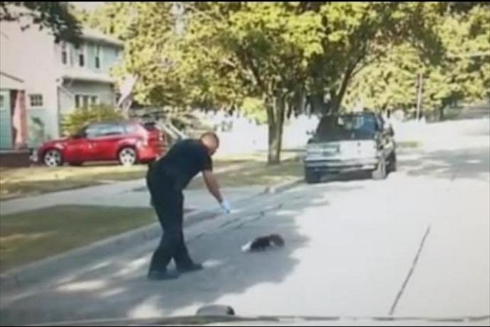 skunk vs cop_4047551270432161895