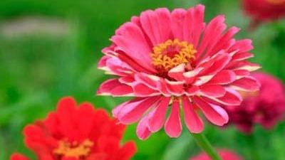 flowers-sized-jpg_20160501031518-159532