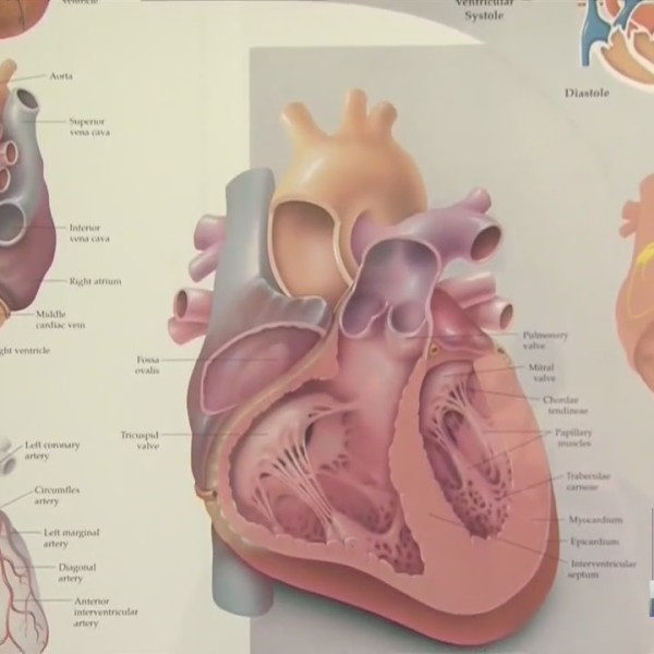 Your Health Matters: heart health for men vs. women