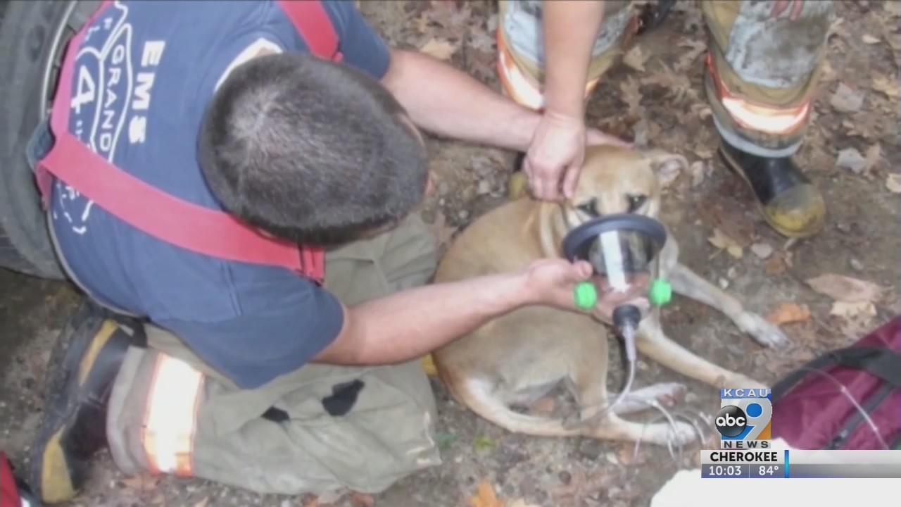 South Sioux City fire department given pet oxygen masks