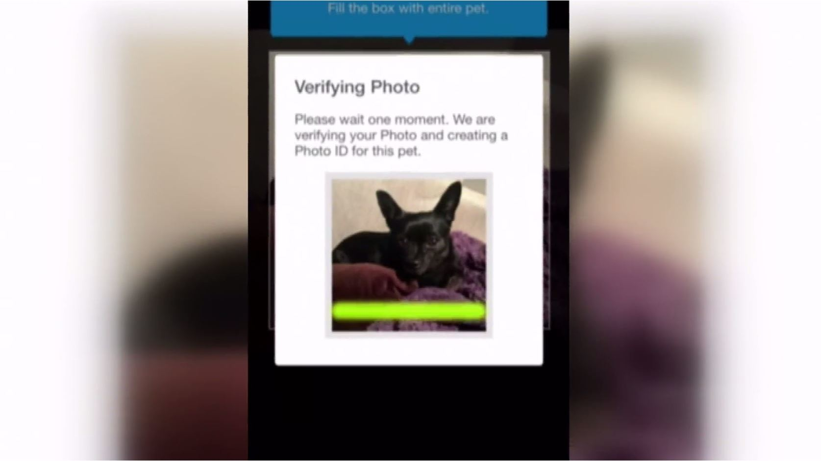 Pasco Animal Services reuniting pets with owners through facial recognition software