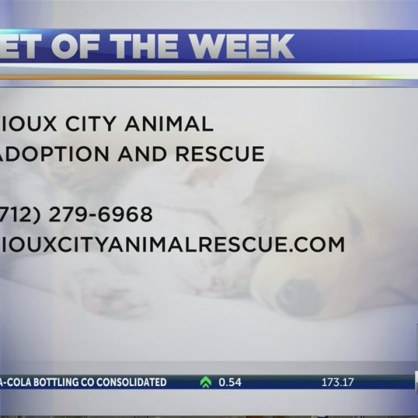 Pet of the Week, 11/2/2018