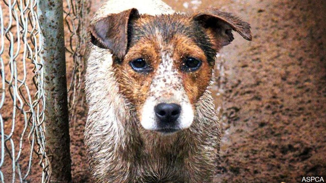 animal abuse, neglect, treatment 2_1553810431391.jpg.jpg