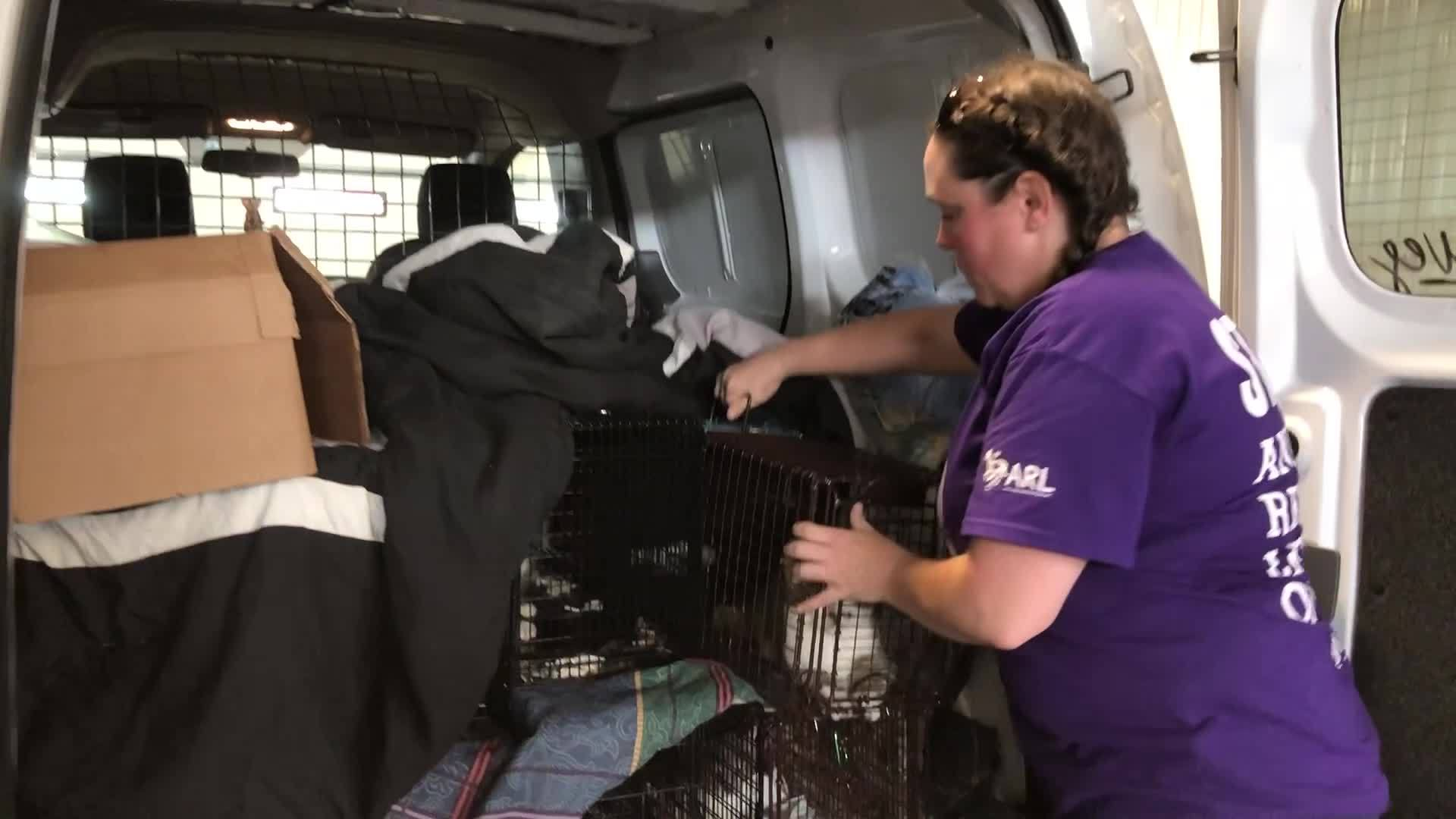More_cats_are_rescued_from_Madrid_home_2_20190606171224-54710709
